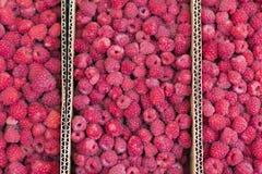 Nya röda mogna hallon i färgrik modell för askabstrakt begreppfrukt texturerar bakgrund Royaltyfri Fotografi