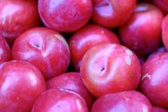 Nya röda plommoner Arkivbild