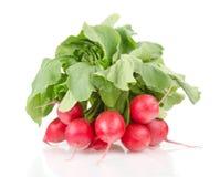 Nya röda rädisor med gröna sidor Royaltyfria Foton