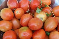 Nya röda saftiga organiska tomater royaltyfri foto