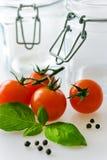 Nya röda tomater med basilikabladet Royaltyfri Bild