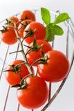 Nya röda tomater med basilikabladet Royaltyfri Foto