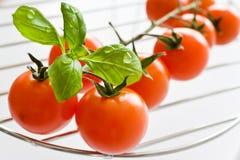 Nya röda tomater med basilikabladet Fotografering för Bildbyråer