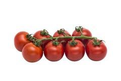 Nya röda tomater tillsammans i rad på isolerad bakgrund Arkivfoto