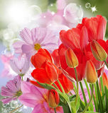 nya röda tulpan på abstrakt vårnaturbakgrund Royaltyfria Bilder