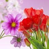 nya röda tulpan på abstrakt vårnaturbakgrund Arkivfoto