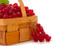 Nya röda vinbär i fruktkorgen. Arkivfoto