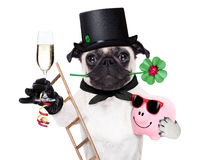 Nya år helgdagsaftonhund Royaltyfri Bild