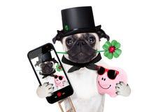 Nya år helgdagsaftonhundselfie Royaltyfri Bild