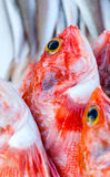 Nya redfishes och annan skaldjur på marknad i Marocko som är klar för Royaltyfria Foton