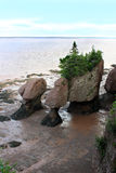 nya rocks för brunswick Kanada hopewell Arkivbild