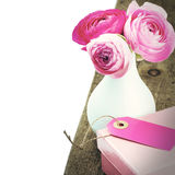 Nya rosa pioner i vas royaltyfria bilder