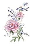 Nya rosa pioner och små blåklockor på vit bakgrund wat Fotografering för Bildbyråer