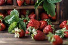 Nya saftiga jordgubbar med sidor En ljus radda, är nya bär av en jordgubbe sund begreppsmat Nya organiska bär Royaltyfria Foton