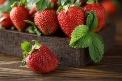 Nya saftiga jordgubbar med sidor En ljus radda, är nya bär av en jordgubbe sund begreppsmat Nya organiska bär Arkivfoto