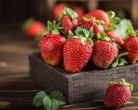 Nya saftiga jordgubbar med sidor En ljus radda, är nya bär av en jordgubbe sund begreppsmat Nya organiska bär Arkivbilder
