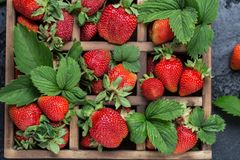 Nya saftiga jordgubbar med sidor En ljus radda, är nya bär av en jordgubbe sund begreppsmat Nya organiska bär Arkivbild