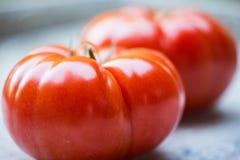 Nya, saftiga organiska röda tomater Royaltyfri Foto