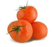 Nya saftiga tomater Arkivbilder