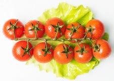 nya saftiga tomater Royaltyfria Foton