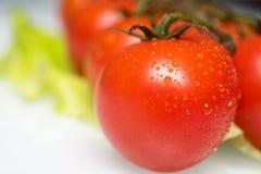 nya saftiga tomater Arkivbild