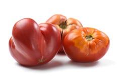 Nya saftiga tomater för släktklenod som är ojämna i isolerad form Arkivfoton