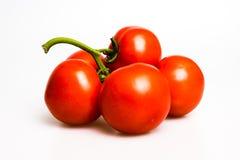 Nya saftiga tomater på vinrankan Arkivfoton