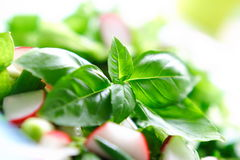 nya salatgrönsaker Arkivfoton