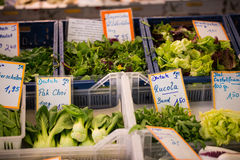 Nya sallad och grönsaker på marknadsplatsen Fotografering för Bildbyråer