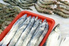 Nya saltvattensfiskar Royaltyfri Bild