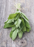 Nya Salvia royaltyfria bilder