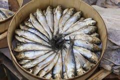 Nya sardiner Royaltyfri Bild