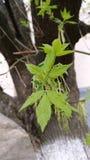 Nya sidor mot bakgrunden av tid för träd på våren royaltyfria foton