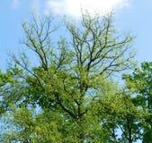 Nya sidor på träden i parkera på solig dag Arkivbild