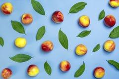 Nya skördade nektariner, platta, lämnar lögnrundan på den naturliga persikan för den rosa keratinen för bakgrundsgrönsakvitaminet arkivfoto