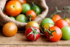 Nya små tomater med den gröna stammen på träbakgrund Royaltyfri Foto