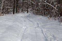 Nya snövesslaspår i skogen arkivfoton