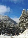 nya snowfall arkivfoto