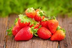 nya stawberries royaltyfri bild