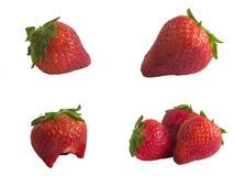 nya strawberrys Arkivbild