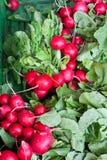 Nya sunda bio rädisor på bondemarknad Royaltyfria Bilder