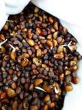 Nya sunda groddar det kärnar ur, sunda och rena ätabegreppet Royaltyfri Foto