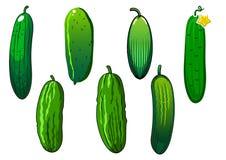 Nya taggiga gröna gurkagrönsaker Arkivfoto