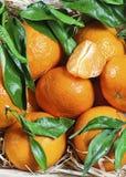 Nya tangerin med sidor Arkivbilder