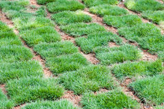 Nya tegelplattor för grönt gräs Arkivbilder