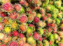 Nya thailändska rambutans Royaltyfria Foton