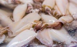 Nya tioarmade bläckfiskar i marknaden Royaltyfri Fotografi