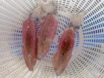 Nya tioarmade bläckfiskar på ett magasin Arkivbilder