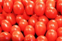 nya tomater Royaltyfri Foto