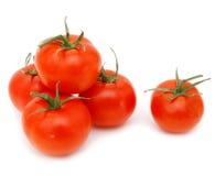 nya tomater Arkivbild
